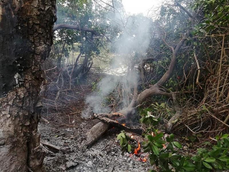 Queman y talan manglares en Barra de Potosí