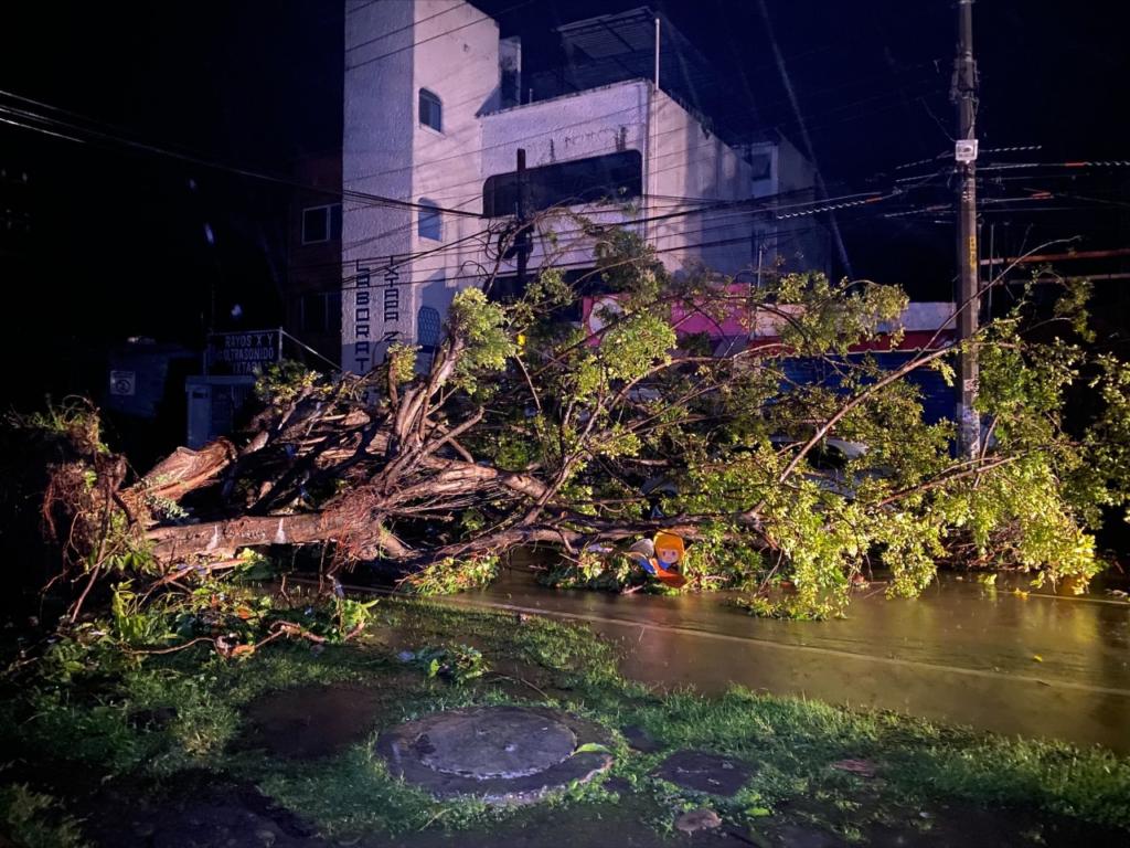 Más de 110 árboles derribados y techumbres dañadas en Zihuatanejo
